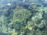 kapoho tide pools (josh) picture 059.jpg