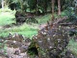 Lava Tree Monument