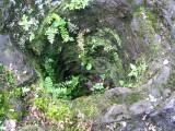 Lava Tree monument Picture 070.jpg