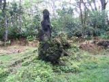 Lava Tree monument Picture 071.jpg