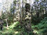 Lava Tree monument Picture 072.jpg
