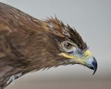 Birds of American Wildlife Refuge