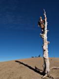 Zack on top of Baden Powell
