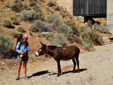 Donkey in the middle of nowhere?!