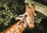 Chang Mai Open Zoo