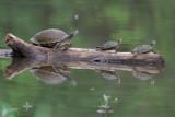 05/25/07 Turtles