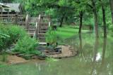 Neighbor's Koi Pond Near Flood Peak