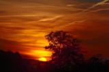 Paris safari sunset