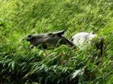 Horse by Rik Poot