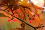 15May07 Tiny Maple Seeds - 16456