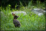 09July07 Baby Bunny - 17068.jpg