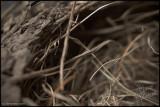 01Sep2007 Birds Nest Macro - 17645