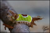 03Sep07 - Interesting Bug 17649