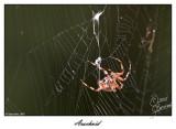 20 Sept 2007 Arachnid - 17814