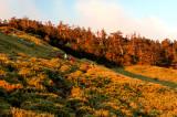 Mt. Hehuan and Fushoushan Farm - PFC Photo Travel