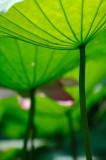 Some Lotus Works