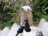 The three cats      Pim  Pam  Poum
