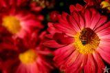 Massachusetts Bee
