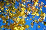 Depth of Fall