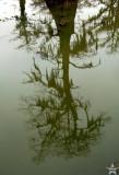 Murky Reflection