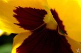 Spring Flowers 19