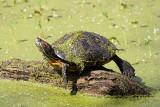 turtle-sm.jpg
