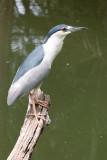 zoo-heron 1 of 1.jpg