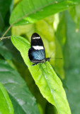 butterfly 3.jpg