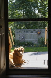 Front Porch Sun