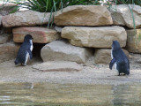 Featherdale Wildlife Park: Fairy Penguns