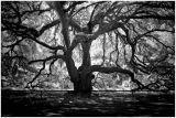 Black & White  Photo's