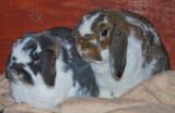 our_bunnies