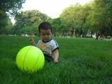 Eating Central Park grass
