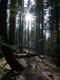 Forest light and shadows