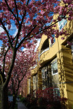 Spring time on Willow Street