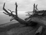 More driftwood