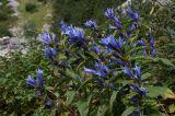 Flowers near Jablan Jezero