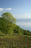 Near Šiponko