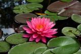 Lilypads & Bloom