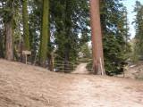 Freeman Creek Grove Trailhead