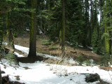 Freeman Creek Grove Trail