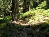 Fir Forest on Slate Mountain