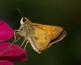Bug Macros