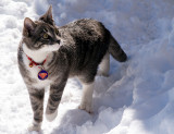 Sven the Snow Cat (see his S)