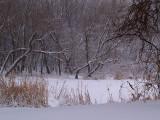 Winters Beauty2
