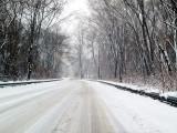 Winters Beauty4