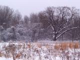 Winters Beauty5