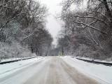 Winters Beauty8