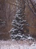 Winters Beauty9