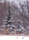 Winters Beauty10